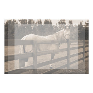 Horse in fly clothes sepia looking back over fence stationery