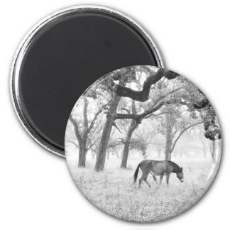 Horse In Foggy Field Of Oaks 2 Inch Round Magnet