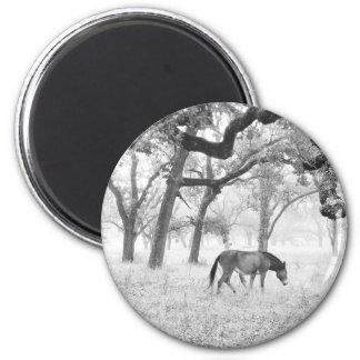 Horse In Foggy Field Of Oaks Magnet