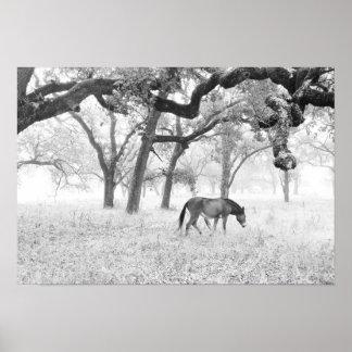 Horse In Foggy Field Of Oaks Poster