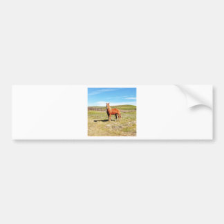 Horse in front of a Napa Vineyard Bumper Sticker