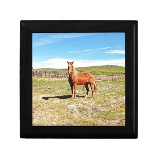 Horse in front of a Napa Vineyard Gift Boxes