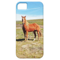 Horse in front of a Napa Vineyard iPhone 5 Cover