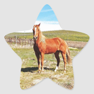Horse in front of a Napa Vineyard Star Sticker