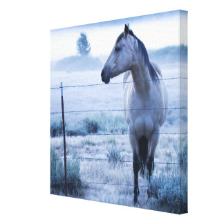 Horse in hazy field canvas print