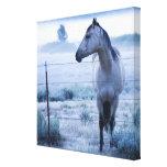 Horse in hazy field gallery wrap canvas