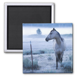 Horse in hazy field magnet