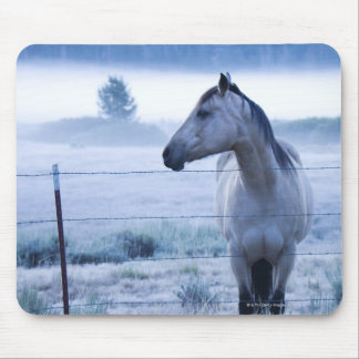 Horse in hazy field mouse pad