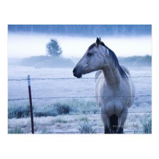 Horse in hazy field postcard