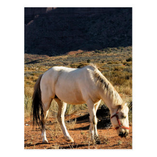 Horse in Monument Valley Postcard
