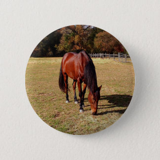 horse in pasture button