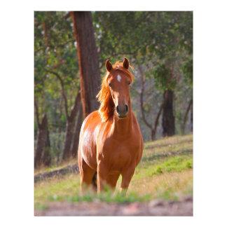 horse in pasture flyer