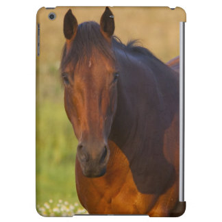 Horse in pasture near Pullman, Washington Cover For iPad Air