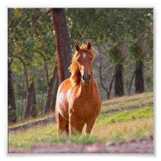 horse in pasture photo print