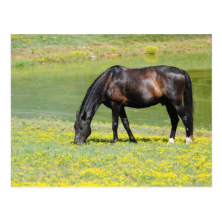 Horse In Pasture Post Card