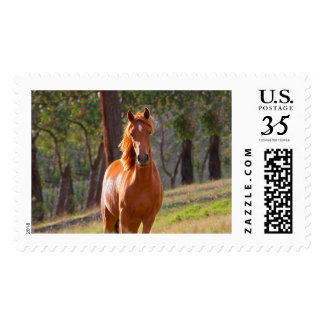horse in pasture postage
