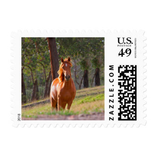 horse in pasture postage stamp