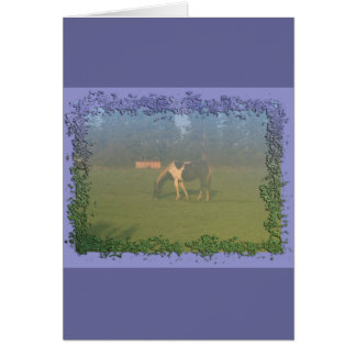 Horse In Pasture: Spotted Horse Eating Cards