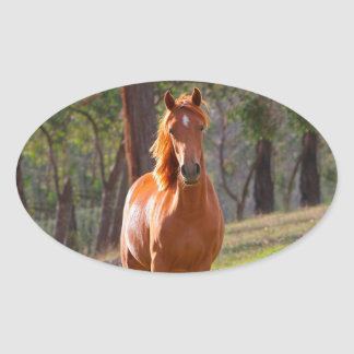 horse in pasture oval sticker