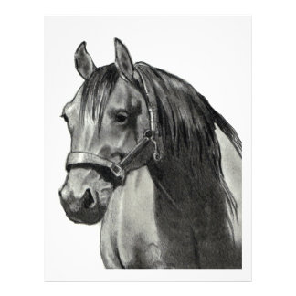 HORSE IN PENCIL: FRONT VIEW FLYER