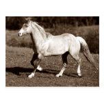 horse in sepia postcard
