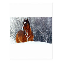 Horse in Snow Postcard