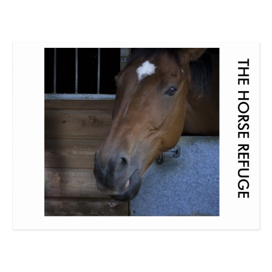 HORSE IN STABLE POSTCARD