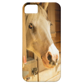 Horse in stables iPhone SE/5/5s case