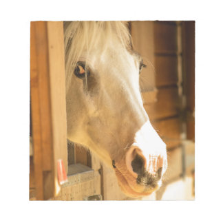 Horse in stables notepad