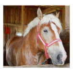 Horse in Stall 1 Poster
