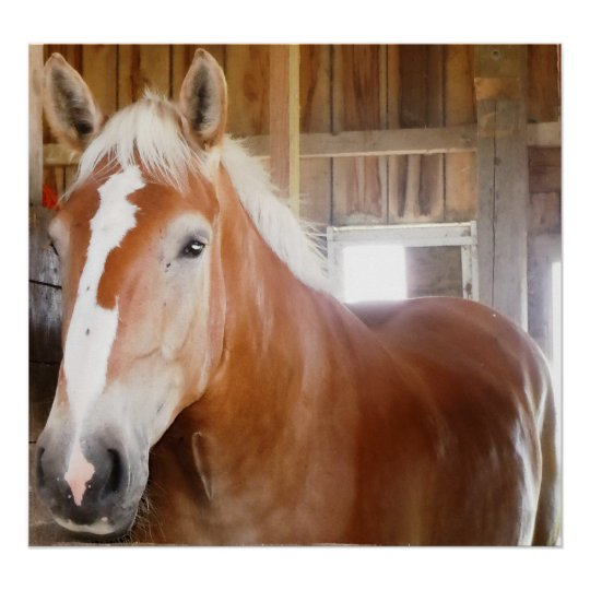 Horse in Stall 2 Poster