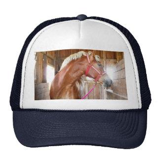 Horse in Stall 3 Cap