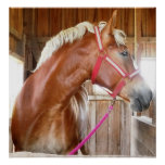 Horse in Stall 3 Poster