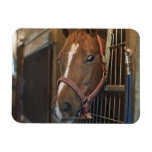 Horse in stall flexible magnets