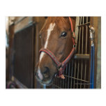 Horse in stall post cards