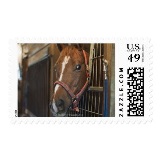 Horse in stall postage