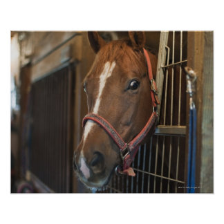Horse in stall posters