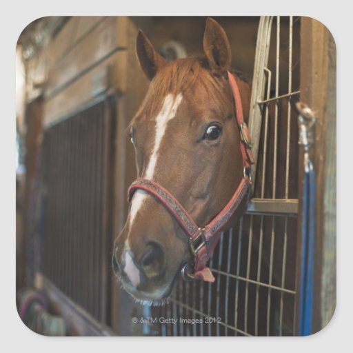 Horse in stall stickers