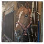 Horse in stall tiles