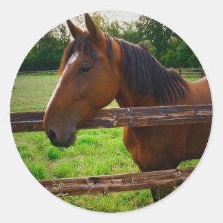 Horse in the field/a horse in the pre one classic round sticker