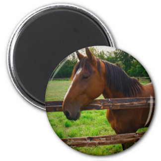 Horse in the field/a horse in the pre one magnet