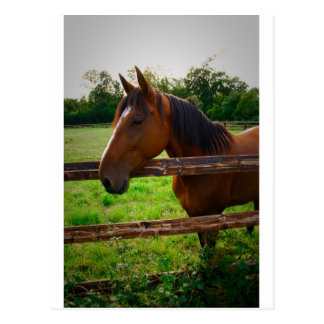 Horse in the field/a horse in the pre one postcard