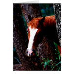 Horse in the forest greeting cards