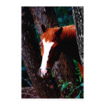 Horse in the forest stationery paper