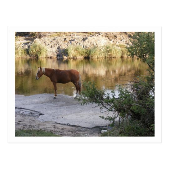 horse in the river postcard
