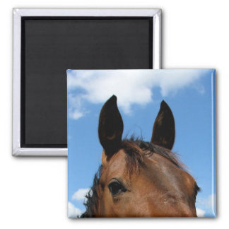 Horse in the sky 2 inch square magnet
