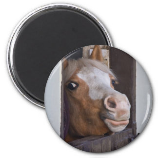 Horse in the Stable Magnet