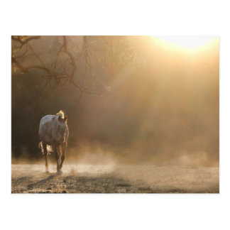 Horse in the sunlight postcard post card