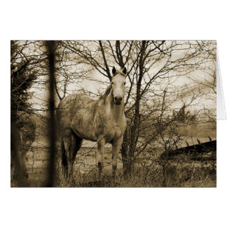 Horse in the wild card