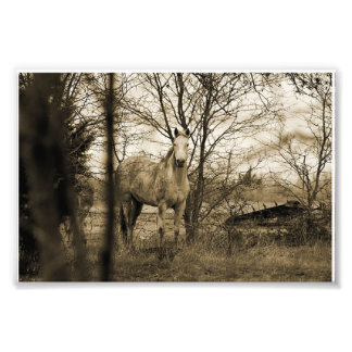Horse in the wild photo